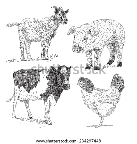 Domestic animals vector drawings set with goat, cow,pig and chicken - stock vector