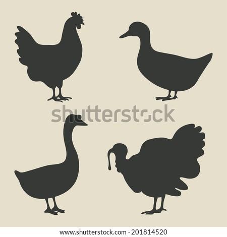 domestic fowl icon - vector illustration. eps 8 - stock vector