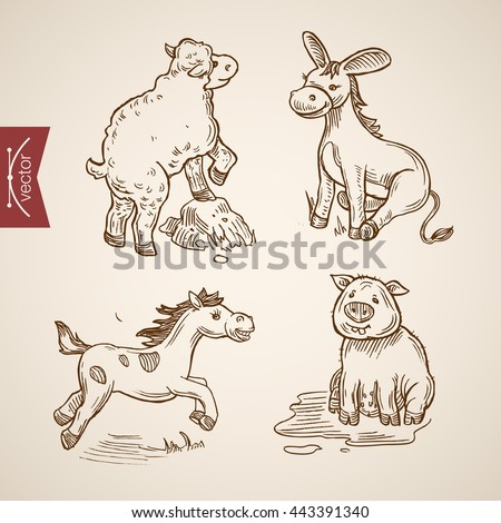 Domestic zoo farm friendly funny animal icon set engraving style pen pencil crosshatch hatching paper