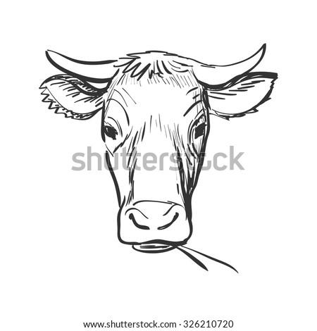 Clipart Of Cow Sketch Doodle Vector K14679330 Search Clip