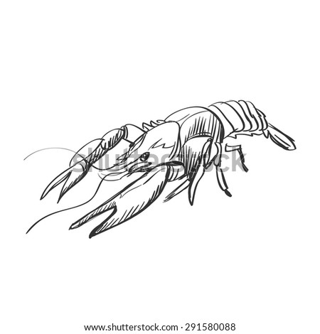Pencil Drawing Crawfish On White Paper Stock Illustration 30905938 - Shutterstock