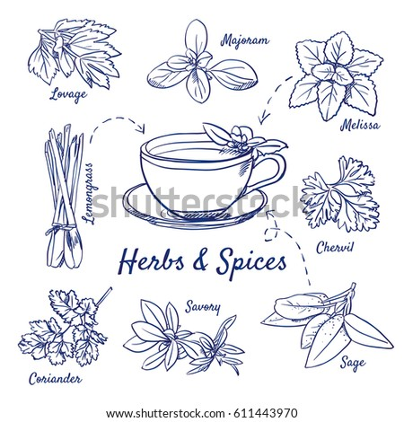 herbs coloring pages - photo#42