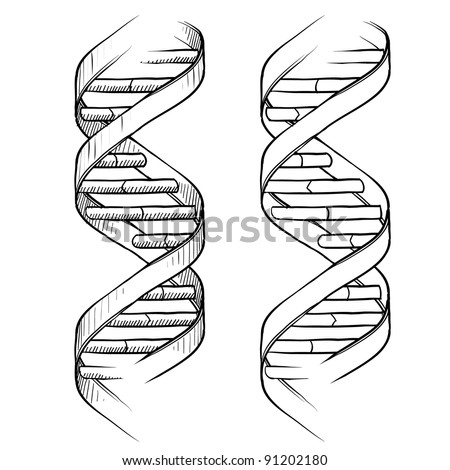 Doodle style genetic DNA double helix illustration in vector format suitable for web, print, or advertising use. - stock vector