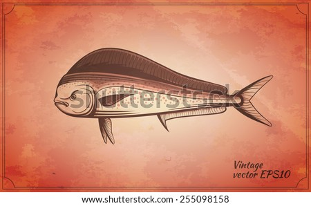 dorado fish vintage vector illustration - stock vector