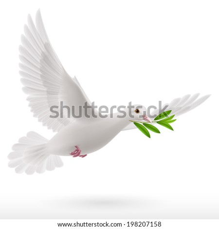 Dove of peace flying with a green twig after flood on a white background - stock vector
