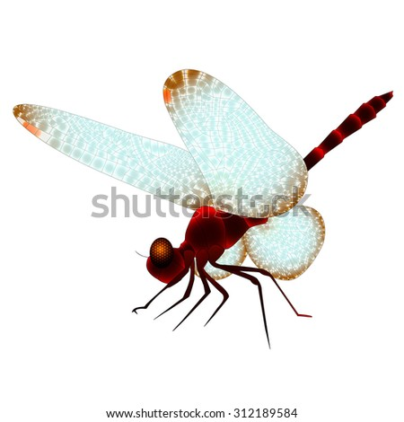 dragonfly - stock vector