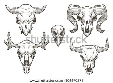 Drawing animal skulls set, vector - stock vector
