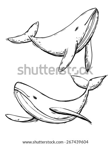 Drawing doodle whales set isolated on white background - stock vector