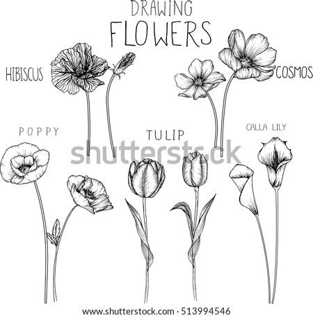 drawing flowers poppytulipcosmoscalla lily and hibiscus flower