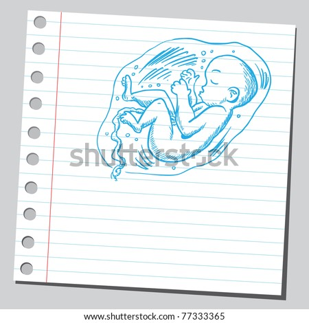 Drawing of a baby in womb - stock vector