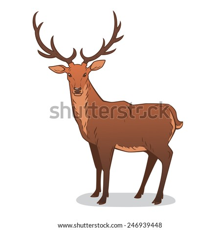 Drawing of an adult male deer