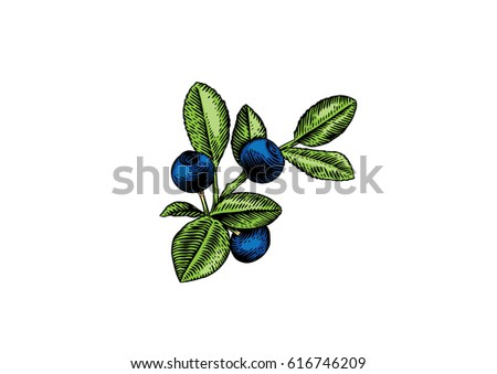Blueberry Fruit Drawing