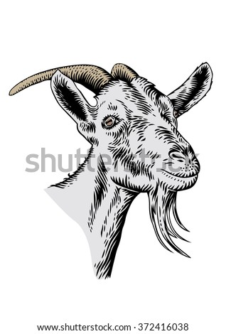 Drawing Of Isolated White Goat Head With Horns On The