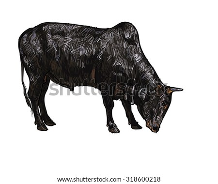 Drawing of ox isolated on white background