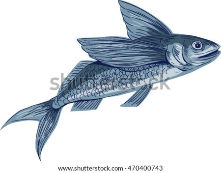 Drawing sketch style illustration of a flying fish or Exocoetidae, a family of marine fish in the order Beloniformes class Actinopterygii viewed from the side set on isolated white background