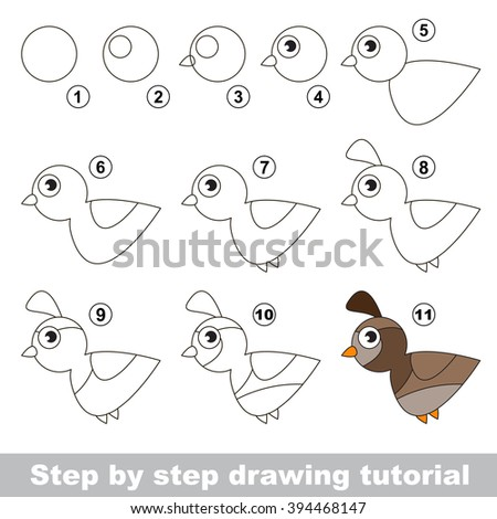 drawing tutorial for children how to draw the funny quail
