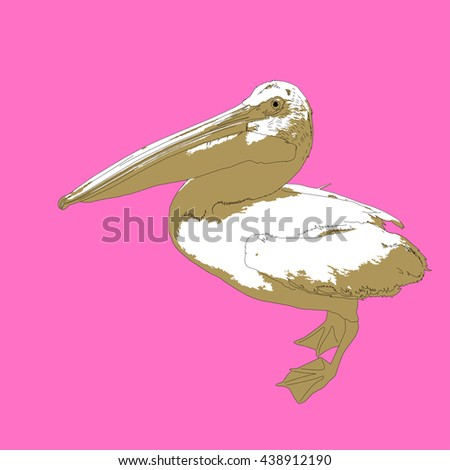 Drawing vector isolated American white pelican - pelecanus erythrorhynchos - stock vector