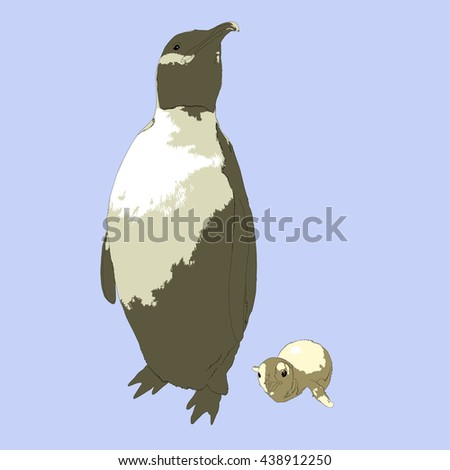 Drawing vector isolated Emperor penguin - aptenodytes forsteri - with a baby - stock vector