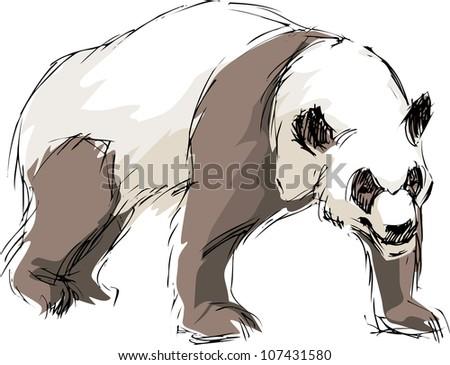 drawn a panda - stock vector