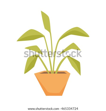 Drimiopsis, Dieffenbachia, Syngonium in pot. Interior home and office plant.