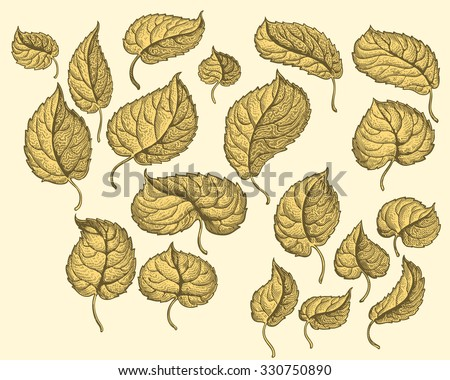 Dry autumn leaves. Design set. Hand drawn engraving. Vector vintage illustration. 8 EPS - stock vector