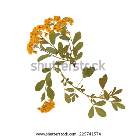 Dry herbarium plants. flowers and leaves vector illustration
