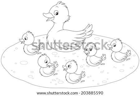 Duck and ducklings swimming - stock vector
