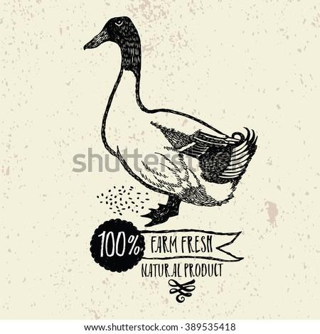 Duck Farm Fresh Natural product - stock vector