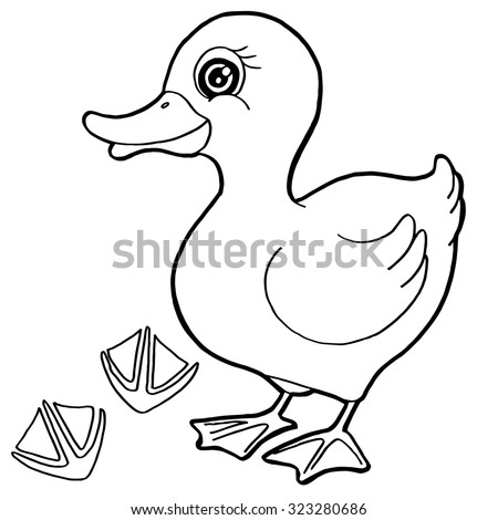 Duck With Paw Print Coloring Pages Vector