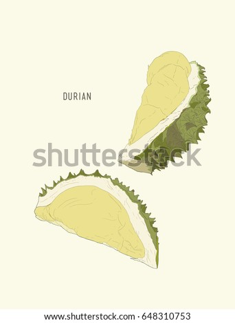 durian , King of fruit ,sketch vector.