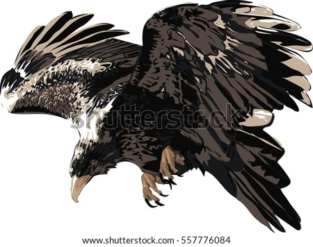 Eagle   - Detailed Realistic Illustration of Bird Isolated on white - Bird of Prey