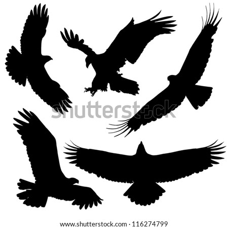 eagle silhouette on white background stock vector 116274799 rh shutterstock com Eagle Wings Tattoo Soaring Eagle Tattoo