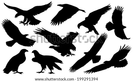 eagle silouettes on the white background - stock vector
