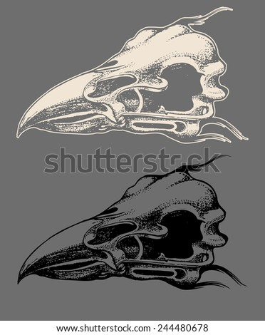 Eagle skull hand draw with invert color isolated - stock vector