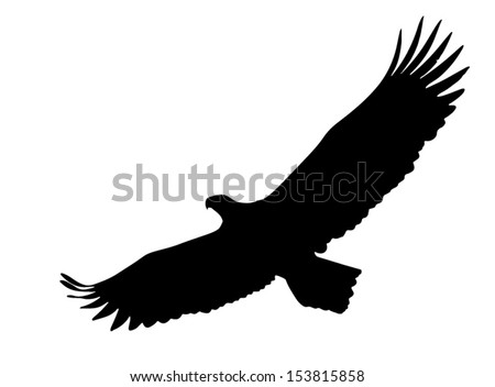Eagle soaring with wings opened wide. - stock vector
