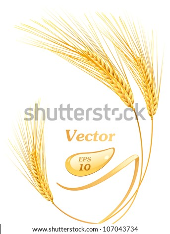 Ears of wheat - stock vector