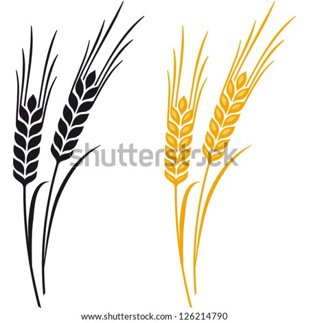 ears wheat barley rye vector visual stock vector 126214790 rh shutterstock com barley vector free download barley vector art free