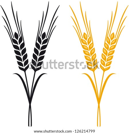 ears wheat barley rye vector visual stock vector 126214799 rh shutterstock com wheat barley vector barley vector free download
