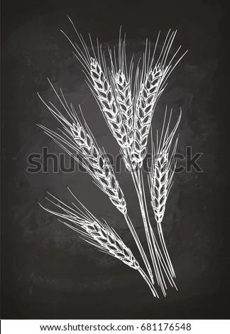 Ears Of Wheat Chalk Sketch On Blackboard Hand Drawn Vector Illustration Retro Style