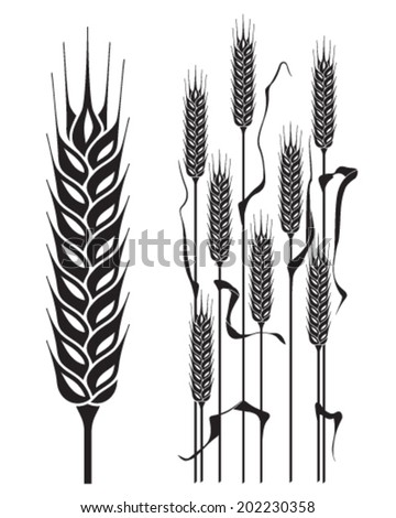 Ears of wheat isolated  - stock vector