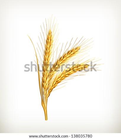 Ears of wheat, vector - stock vector