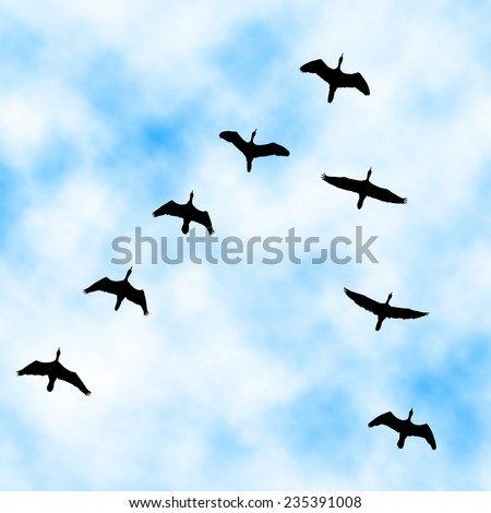 Editable vector illustration of a cormorant flock flying overhead with sky background made with a gradient mesh - stock vector