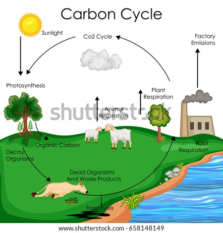 Education chart biology carbon cycle diagram stock vector hd education chart of biology for carbon cycle diagram vector illustration ccuart Image collections