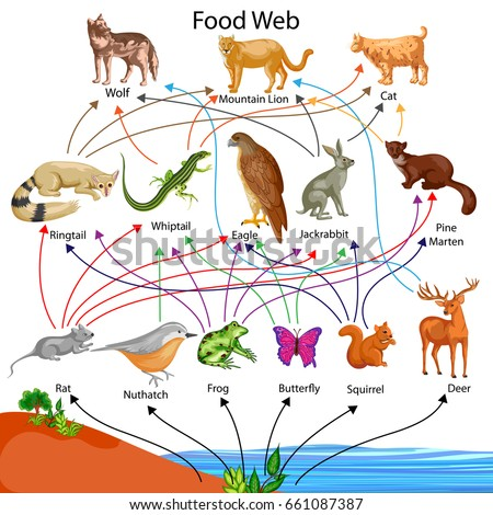 Asian taiga food web