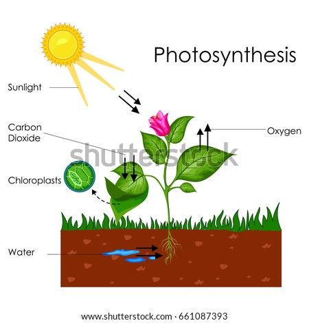 Vector Illustration In Rank M Rank Education Chart Of Biology For