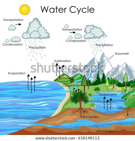 Rain cycle diagram wiring center education chart biology water cycle diagram stock vector 658148113 rh shutterstock com water cycle diagram labeled water cycle diagram worksheet ccuart Gallery