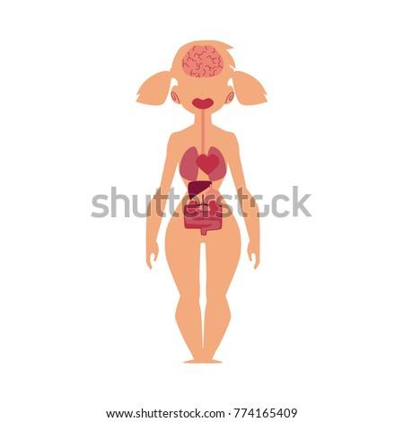 Educational Anatomy Chart Infographics Human Internal Stock Vector