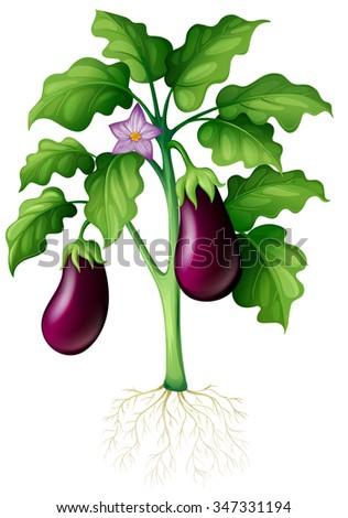 Eggplants on the tree illustration - stock vector