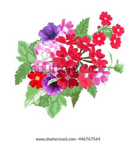 Elegant bouquet with verbena and petunia flowers, design element. Floral composition can be used for wedding, baby shower, mothers day, valentines day cards, invitations. Vector in watercolor style - stock vector