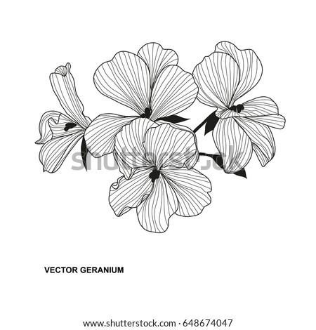 elegant decorative geranium flower design element floral branch floral decoration for vintage wedding